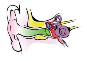 vestibular-system-1